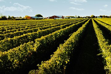 Full-Day Niagara Winery Tour from Toronto Tickets