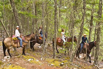 Half Day Guided Horseback Ride at Birkenhead Lake