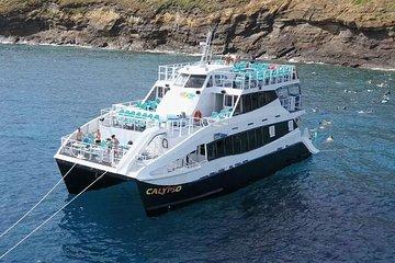 Molokini Snorkeling Adventure Aboard Calypso (MAUI / Ma'alaea Harbor)