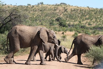 Go Safari (Johannesburg) - 2019 All You Need to Know Before