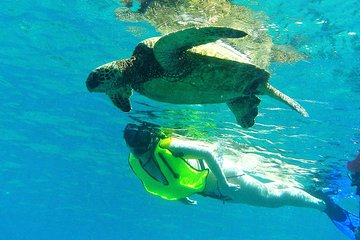 Top 10 Booked Oahu Snorkeling (with Prices)