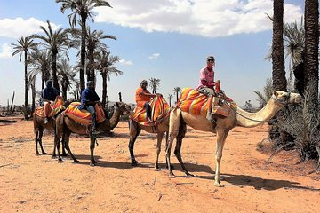 Sunset Camel Ride Tour in Marrakech Palm Grove