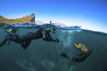V&A Waterfront Seal Snorkeling
