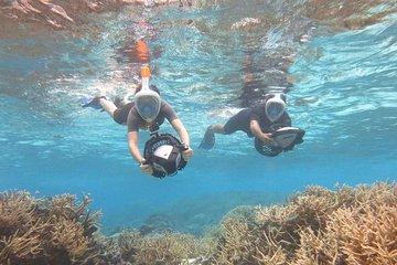 Excursão Snorkeling do poder das...