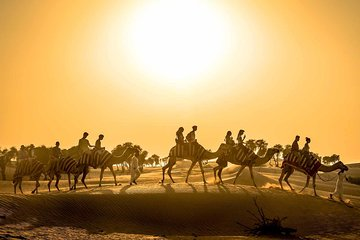 Dubai Sunset Camel Trekking with Shows & BBQ Dinner