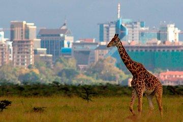 Afternoon half day mini safari to Nairobi National Park