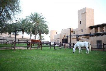 Horseback Riding in Dubai Desert