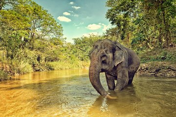 Tour por el Santuario de la jungla...