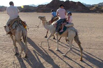 Camel Riding Private Tour from Sharm El Sheikh
