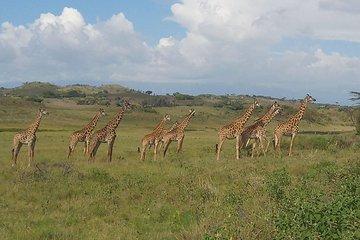 21 Tage: Tansania Safari