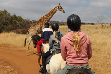 THE TOP 10 South Africa Horseback Riding (w/Prices)