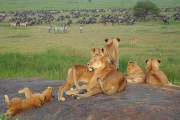 Luksus Safari 7 Nights, 8 Days...