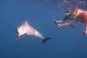 Viagem Dolphin House
