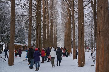 Private Tour Nami Island with Petite France or The Garden of Morning Calm