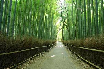 Day Trip by Bus to Kyoto and Nara from Osaka/Kyoto