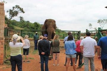 Elephant Sanctuary Tour From Johannesburg
