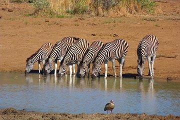 Pilanesberg Game Reserve 6 Hour Sunrise Safari from Johannesburg or Pretoria