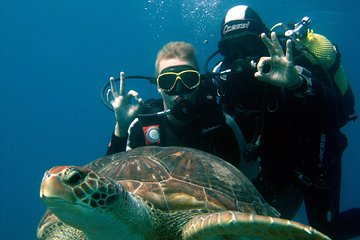 Try Scuba Diving in the South of Tenerife