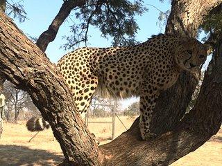 Ann Van Dyk Cheetah Centre Tour from Johannesburg or Pretoria