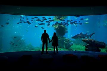Palma Aquarium Entrance with Transfers