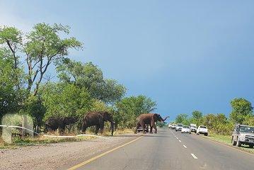 Sunday Afternoon Walk In Owen Park >> Afrizim Rhino Walk Mosi Oa Tunya Park Livingstone 2019 All You