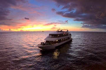 the 10 best st petersburg tours excursions activities 2019 rh viator com  things to do in st petersburg florida on a rainy day