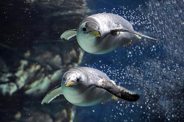 Aquarium de Gênes et visite de la...