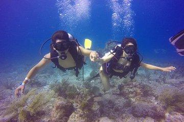 Top Cancun Scuba Diving | Lowest Price Guaranteed | Viator