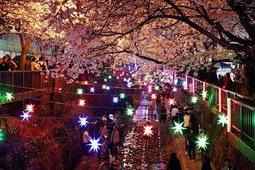 Romantic Night Tour naar Jinhae ...