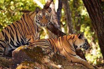 Wayanad Wildlife Heaven de Bangalore