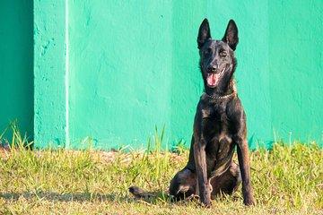 NPA Explosive Detection Dogs