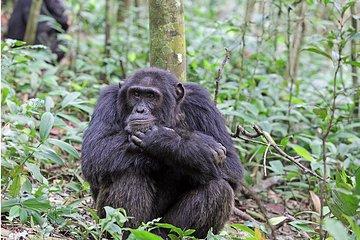 5 Days Uganda Primate Wildlife Safari...