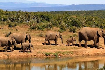 4 jours de safaris en Ouganda avec la...