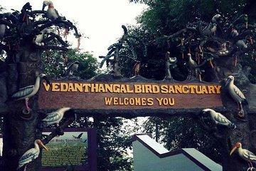 Visit to Vedanthangal Bird Sanctuary...