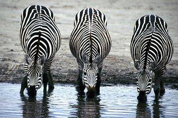 2 Dager Wildlife Safaris ved Lake...