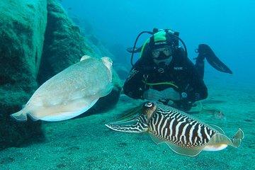 Single Dive for qualified divers from shore, region Puerto del Carmen.