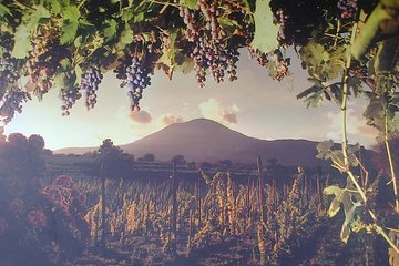Private Tour Departure from Naples - Pompeii with Lunch and Local Wine Tasting