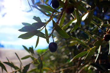 Olive oil and Mountains Route - Small group, oil tasting and lunch included