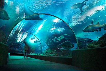 SEA LIFE Bangkok Ocean World  with Private Transfer