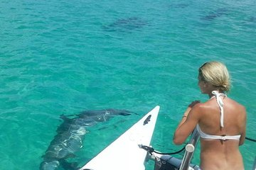 Key West Wild Dolphin Sail and Shallow-Water Snorkel
