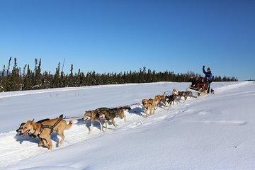 1-hour Winter Dog Sledding in Fairbanks
