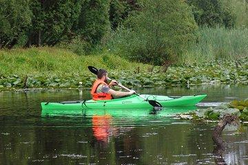Rio Cruces' Wetlands Kayaking...