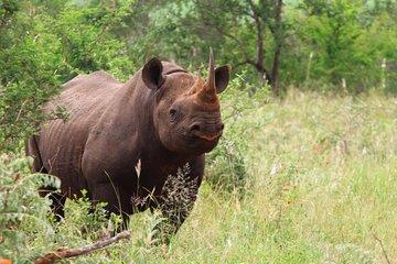Hazyview buffalo Game lodge - South Africa | TripAdvisor