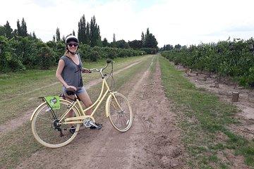 Biking among Luján de Cuyo (Mendoza...