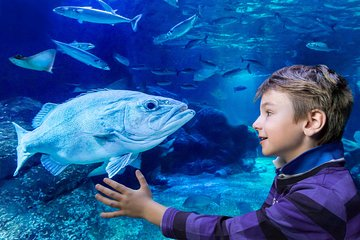 Berlin Combo: LEGOLAND Discovery Centre and SEA LIFE Berlin