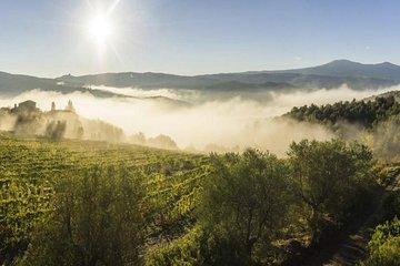 Viaje del vino Brunello di Montalcino...