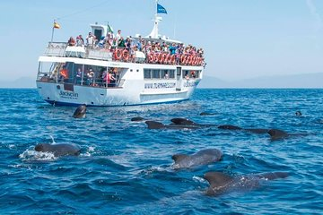 Whales and dolphins tour - Tarifa