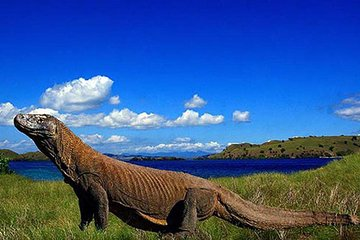 2-Day Komodo National Park and Rinca Island Wildlife Adventure from Bali