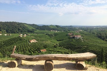 Prosecco - Wine tour & tasting - Full day in the Prosecco region