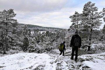Stockholm Nature Hiking - Winter